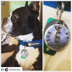 Guster is such a stud in his dog tag shop link in bio for yours! #dogsofinstagram #thRUFFtyPup #RUDEdog #etsy #etsyshop #etsyseller #etsydog #Repost @erinlevine with @repostapp. ・・・ Looking sharp in his new tag from @thruffty_pup #gusterlove