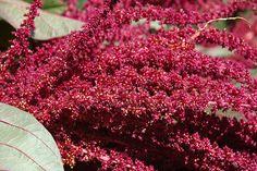 Dal blog nascerà una #pianta di #Amaranto!