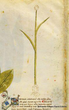 Your virtual eye on illuminated manuscripts, rare books, and the stories behind them. Voynich Manuscript, Illuminated Manuscript, Botanical Art, Botanical Illustration, Bio Art, Outsider Art, Planting Flowers, Folk Art, Modern Art