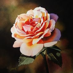 Sunset Rose -- Jacqueline Gnott