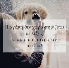 Σωστό!!!! Animal Quotes, Dog Quotes, Life Quotes, Feeling Loved Quotes, Couple Presents, Greek Words, Greek Quotes, Real Friends, Meaningful Quotes