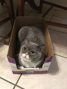 Just another cat loaf http://ift.tt/2p5kI5e
