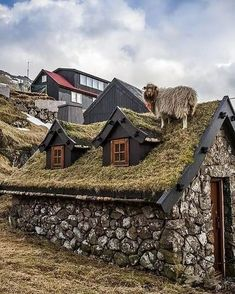 Places Around The World, The Places Youll Go, Places To Go, Around The Worlds, Tiny House, Living Roofs, Cabins And Cottages, Faroe Islands, Stone Houses
