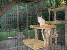 Cat Enclosure - Love this idea!!!