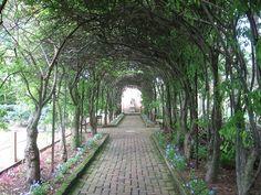 pleached allée in the glen burnie historic gardens in Winchester, VA (http://www.shenandoahmuseum.org/attractions/gardens/)