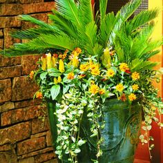 1000 Images About Patio Pots And Containers On Pinterest