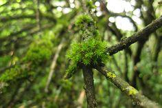 Die Raumfee: Baummoos // Tree moss