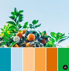 an orange-tree-inspired color palette