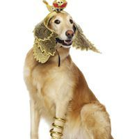 Egyptian Dog Costume http://cooldogcostumes.com/product/egyptian-dog-costume/