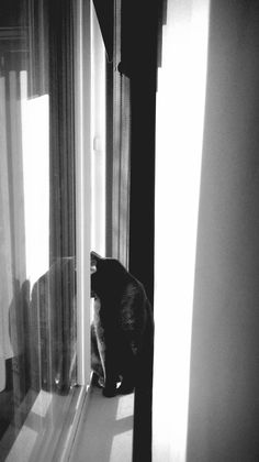 January 2, 2015 | Francessssca | Photo of the Day: Mr. Dutch Spying on the Neighbors