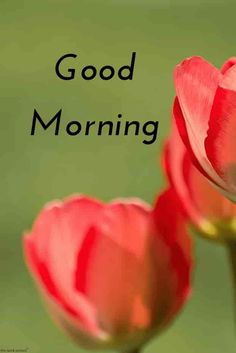 Looking for Best Good Morning HD Images? Check out our collection of Beautiful HD Pictures, Photos, Pics, Wishes and Greetings to send on WhatsApp for Free. Good Morning Picture Messages, Good Morning Kiss Images, Good Morning Greeting Cards, Good Morning Flowers Pictures, Good Morning Dear Friend, Good Morning Kisses, Good Morning Beautiful Pictures, Latest Good Morning Images, Good Morning Images Download