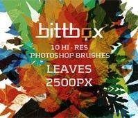 Brushes – Leaves