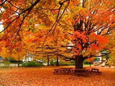 After Nashville... I really can't wait to live somewhere with changing leaves. And seasons. And less deathly humidity.