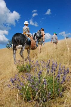 Go walking with a donkey (based in the mountain village of Eourres, west of the town of Sisteron in Haute Provence). Provence, Mountain Village, Le Havre, Images, France, Explore, Donkey, Animals, Walking