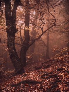 Magic Forest in Crimea (Ukraine) by Arsenii Gerasymenko.Autumn ༻神*ŦƶȠ*神༺ Beautiful World, Beautiful Places, Beautiful Pictures, Terre Nature, Nature Sauvage, Magic Forest, Deep Forest, Walk In The Woods, Mists