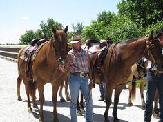 Horses on High Bridge Trail State Park, Virginia