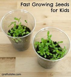 Fast Growing Seeds for Kids - these ideas help prevent kids losing interest while waiting for seeds to grow!
