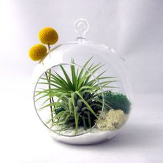 Tillandsia and Billy Buttons :: seandasters Shop :: $25.00