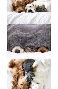 Nada como un perro y un gato juntos