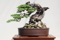 Plantas Bonsai, Bonsai Trees, Planter Pots, Nature, Bonsai