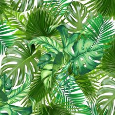 green tropic Art Print ($27) ❤ liked on Polyvore featuring home, home decor, wall art, tropical wall art, green home decor, tropical home decor and green wall art
