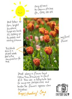 How to photograph the stunning tulips you're seeing around at the moment. #flowerphotography #tulips #photographycourses www.loveyourlens.co.uk Flower Photography, Photography Courses, Photography For Beginners, Flower Beds, Tulips, In This Moment, Fruit, Flowers, Flower Photos