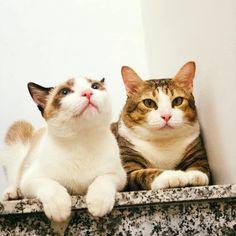 Chanbaek, Funny Animals, Cats, Gatos, Kitty Cats, Humorous Animals, Cat, Hilarious Animals, Kitty