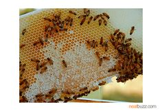 20 USES FOR HONEY YOU NEVER THOUGHT OF    NEATBUZZ.COM