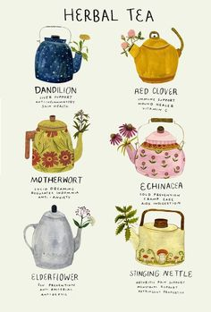 """madisonsaferillustration:""""Ive been a bit under the weather. Here's a poster about medicinal herbs, many of which im using now."""" madisonsaferillustration:""""Ive been a bit under the weather. Here's a poster about medicinal herbs, many of which im using now. Buch Design, Tea Blends, Book Of Shadows, Tea Recipes, Salad Recipes, Food Illustrations, Herbal Medicine, High Tea, Herbal Remedies"""