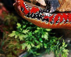 Stunning Reptilia