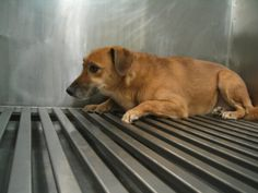 Tens of thousands of dogs and monkeys are tormented and killed in cruel experiments in U.S. laboratories every year. Urge Congress to earmark…