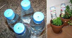 Autoriego. Botellas con orificio para goteo de riego