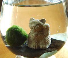 Marimo and Maneki Neko Cat Terrarium KIT for Double by TyberKatz, $5.99