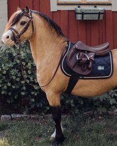 Little pocket rocket ? Doesn't he look handsome in his burgundy saddle … Little pocket rocket ? Doesn't he look handsome in his burgundy saddle ? // Equestrian Stockholm - Art Of Equitation Most Beautiful Horses, Pretty Horses, Animals Beautiful, Poney Welsh, Horse Meme, Barrel Racing Horses, Cute Ponies, Majestic Horse, Majestic Animals