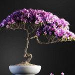 Bonsai tree vol.1 – 12-2