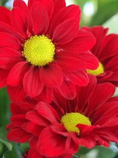 red flowers....