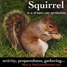 Dream dictionary meaning for the dream symbol: squirrel. Animal Spirit Guides, Spirit Animal, Lucid Dreaming, Dreaming Of You, Book Meaning, Facts About Dreams, Dream Dictionary, Dream Symbols, Dream Meanings