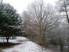 bory zimą