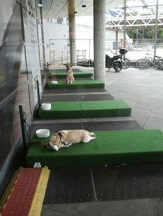 Ikea crea il parcheggio... per i cani  http://folliacreativa.com/2012/08/03/ambient-ikea-crea-il-parcheggio-per-i-cani/