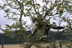 12. Juli 2016 Plants, Norwegian Forest Cat, Cats, Plant, Planets