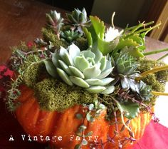 30 Plus Featured Pumpkin Ideas for Halloween and Fall - Succulent Filled Pumpkin! Fox Hollow Cottage A Vintage Fairy Pumpkin Crafts, Fall Crafts, Pumpkin Ideas, Diy Pumpkin, Autumn Decorating, Fall Decor, Pumpkin Decorating, Decorating Ideas, Pumpkin Planter