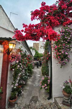 Andalucia Spain, Flower Aesthetic, Most Beautiful, City, Flowers, Instagram, Cordoba Spain, Houses, Gardens