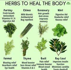 Sore Throat Relief, Heartburn Relief, Healing Herbs, Medicinal Plants, Natural Medicine, Herbal Medicine, Organic Herbs, Natural Herbs, Natural Healing