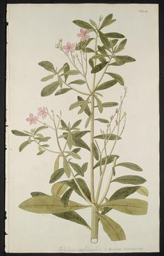 v. 3 - Hortus botanicus vindobonensis, seu, Plantarum rariorum, quae in Horto botanico vindobonensi ... - Biodiversity Heritage Library