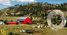 A Vermont couple reinvigorates the farm - and their profits - with 'carbon farming'.