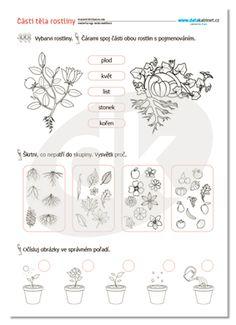 Tola, William Shakespeare, Montessori, Container, Education, School, Gardening, Spring, Biology