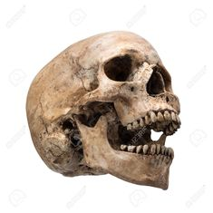 28216320-sideview-of-human-skull-open-mouth-on-isolated-white-background-Stock-Photo.jpg (1300×1299)