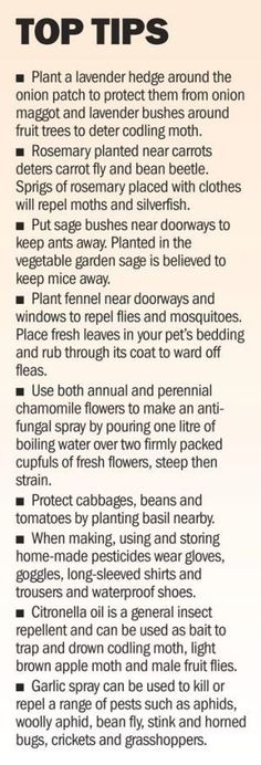 Organic gardening tip. Are you considering developing your own personal organic and natural vegetable backyard garden? Here are a few earth-friendly gardening tips designed to lead you in the best direction.