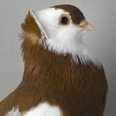 #Dove #bird