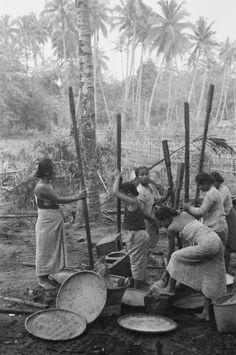 Tjimarak (West-Java) Vrouwen aan het rijststampen. 1949 Vintage Pictures, Old Pictures, Old Photos, Indonesian Women, Dutch East Indies, Javanese, Vintage Photography, Illusions, Architecture Illustrations